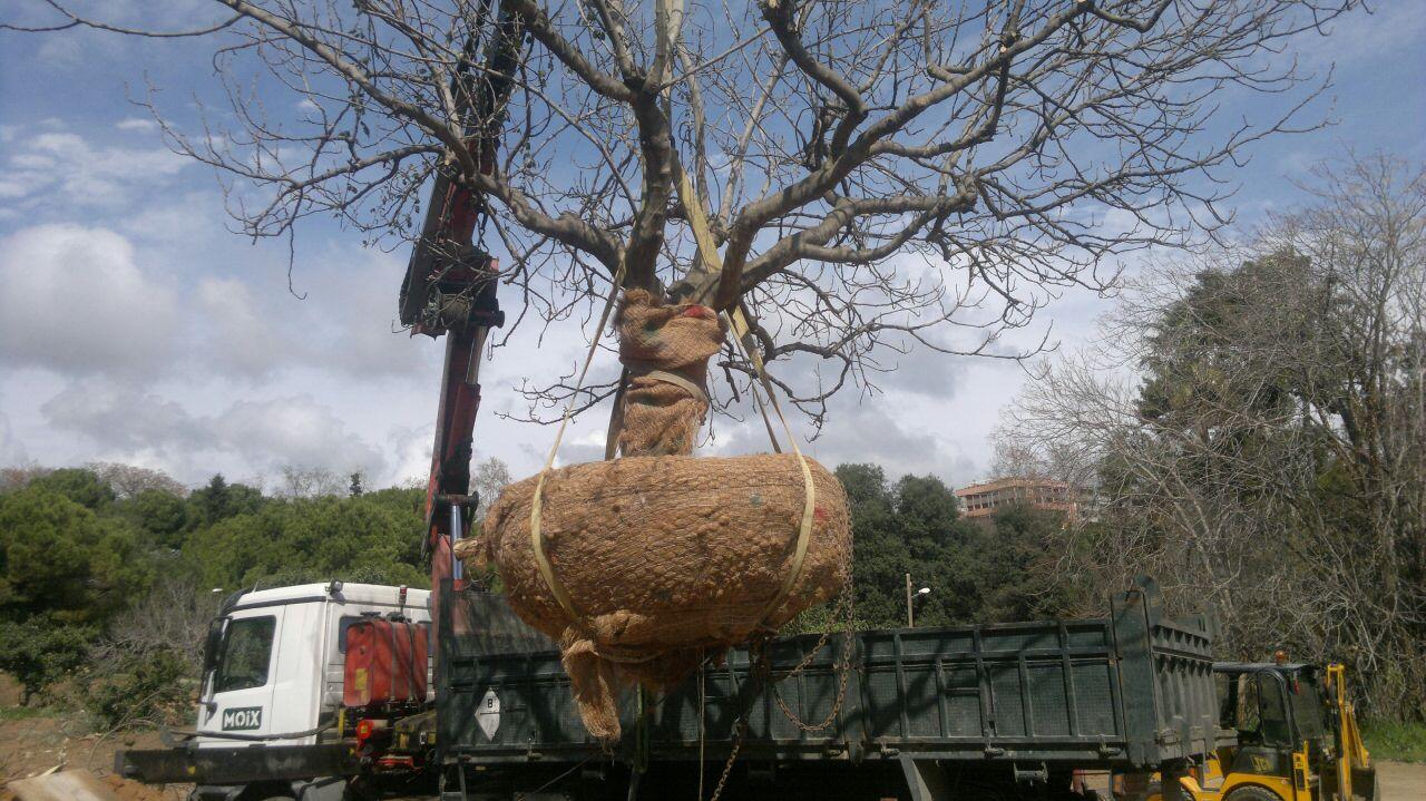 arboricultura-que-fem4