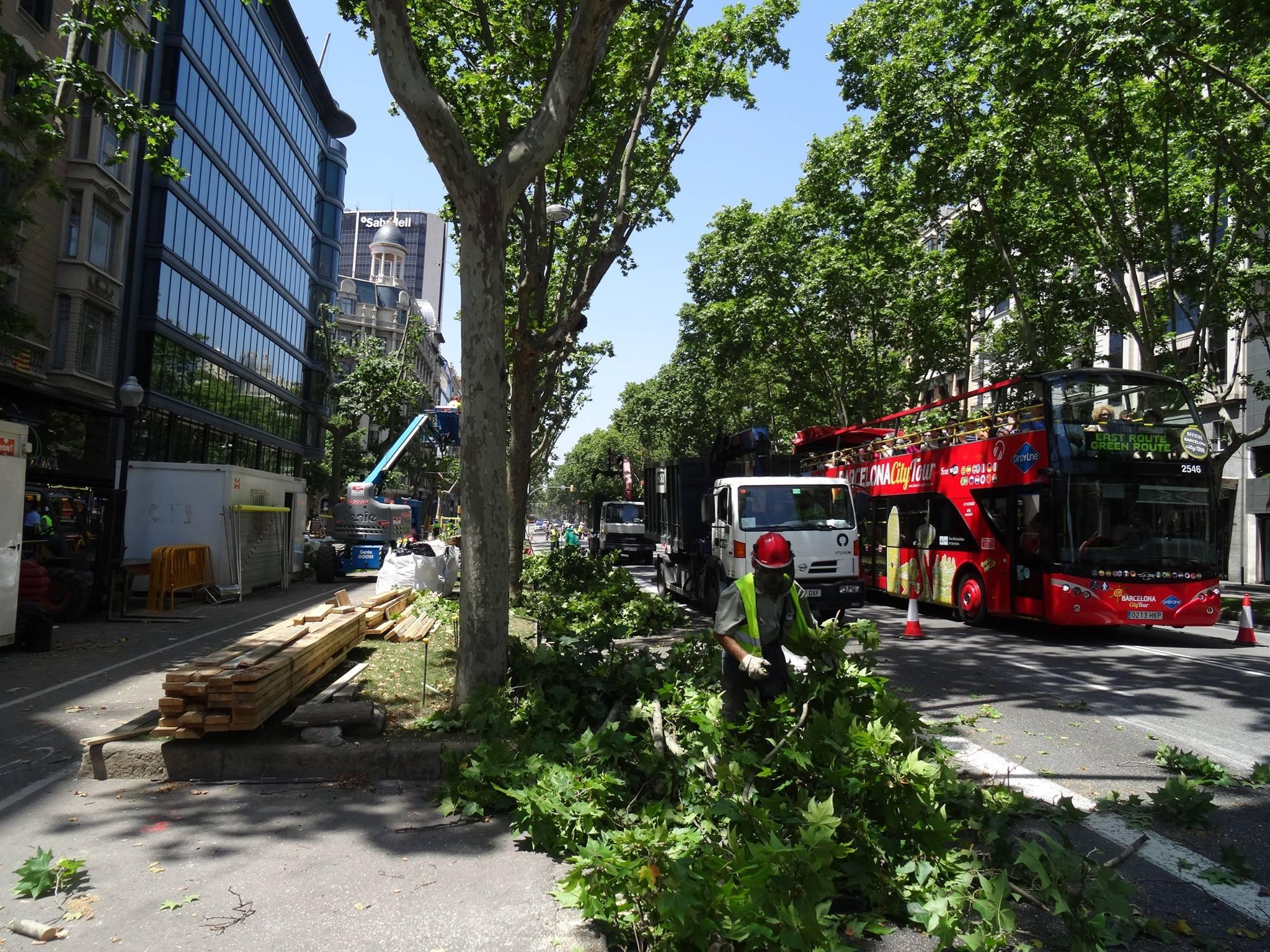 arboricultura-que-fem5