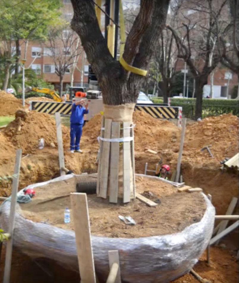 arboricultura5